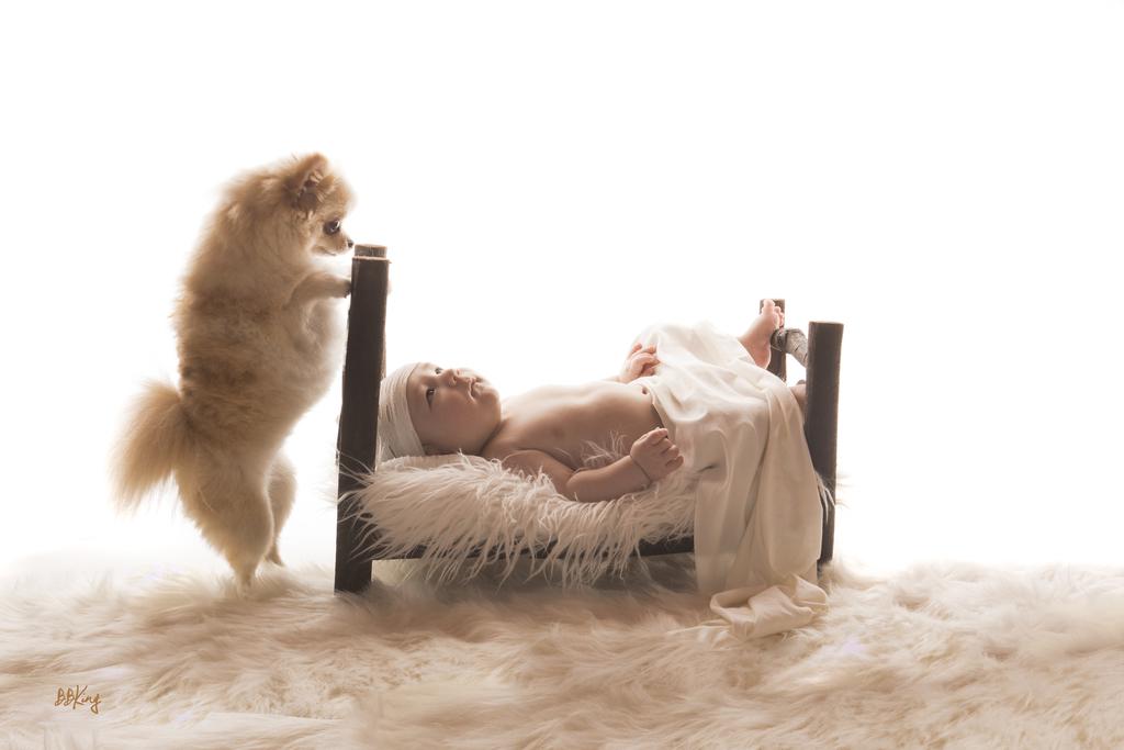 Séance photo en studio pour bébé avec chien dans le 06